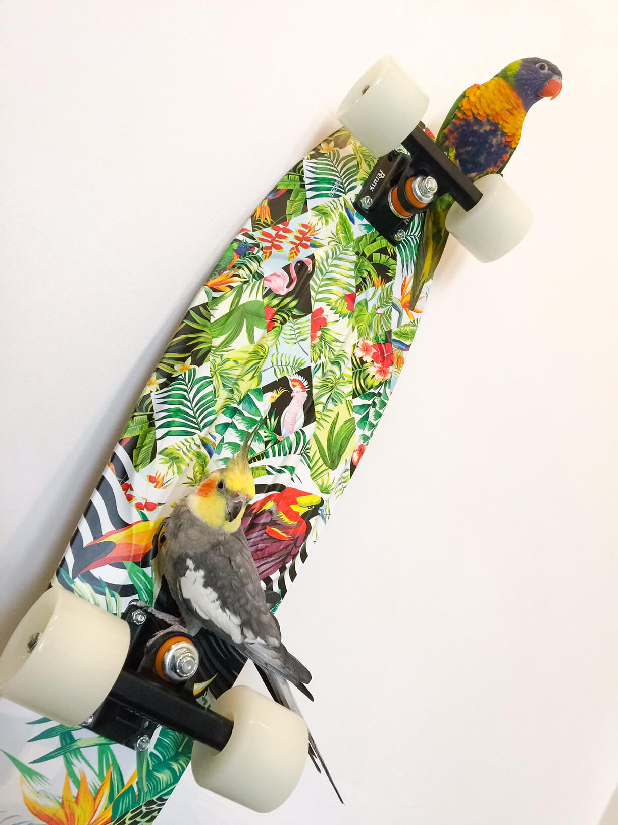 Birds on Boards - Penny Skateboard Australia - Perth Blogger Katie Rebekah
