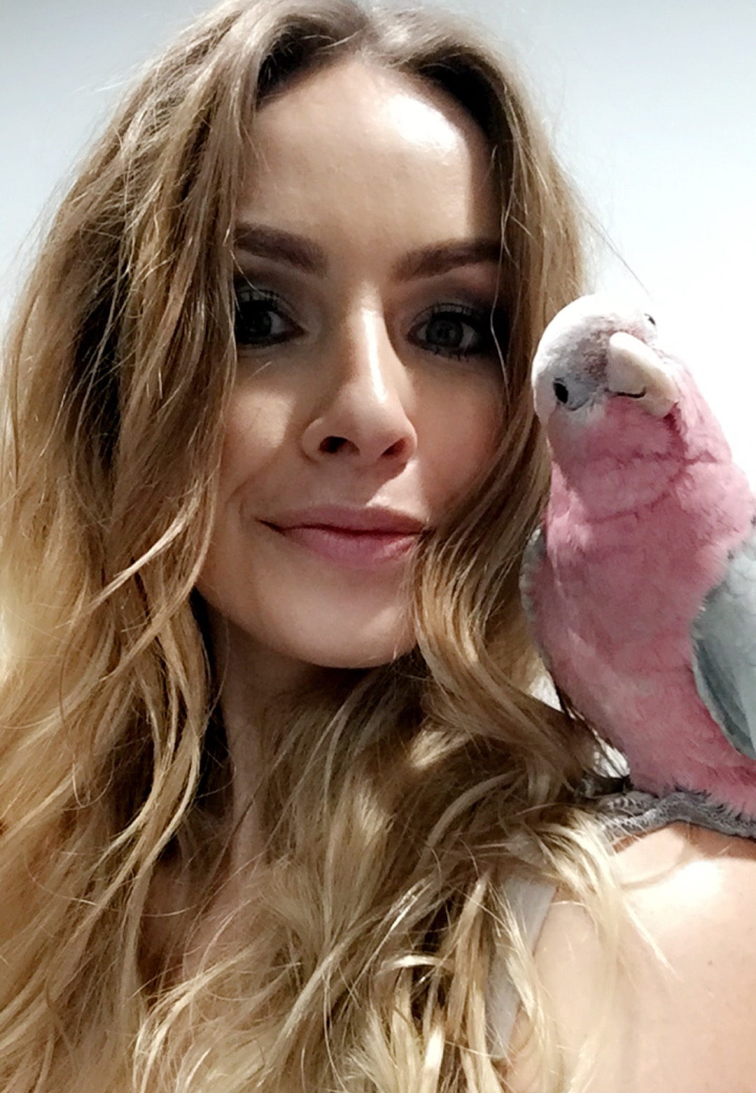 Thor the Pink & Grey Galah Cockatoo - Australian Perth Blogger Katie Rebekah.jpg